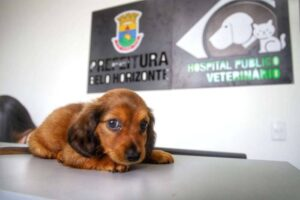 Hospital Veterinário Gratuito Prefeitura PBH